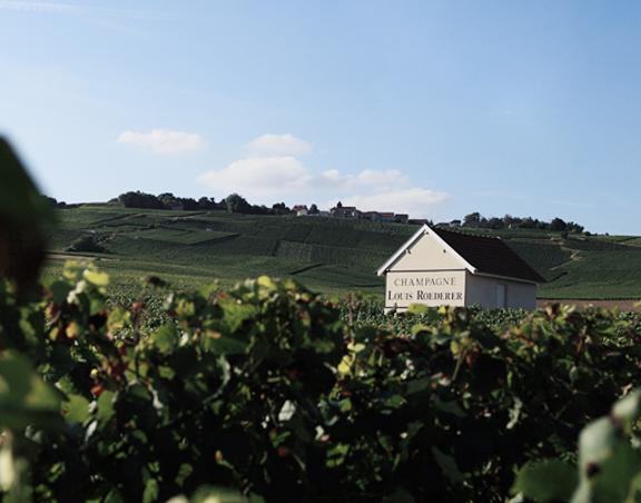 Vista dei vigneti in Champagne di Maison Louis Roederer