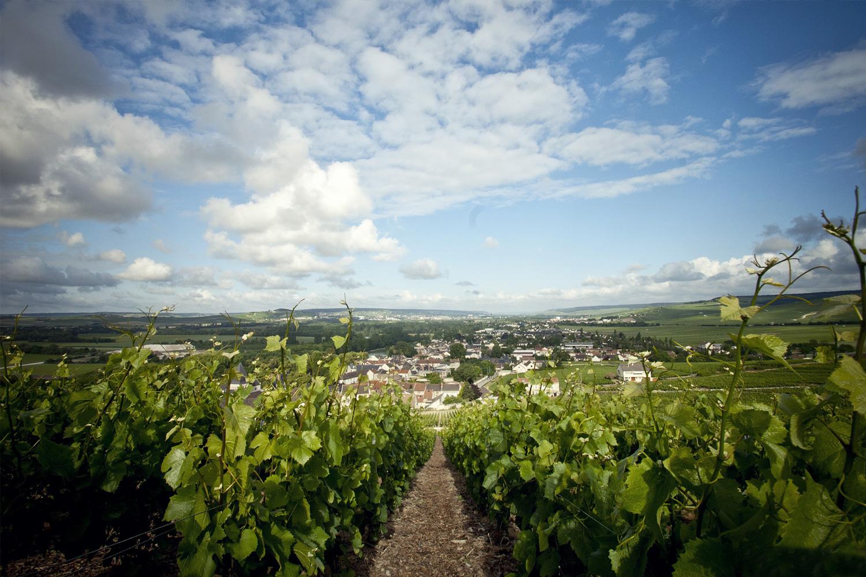 Vista dei Vigneti di Maison Philipponat della Champagne