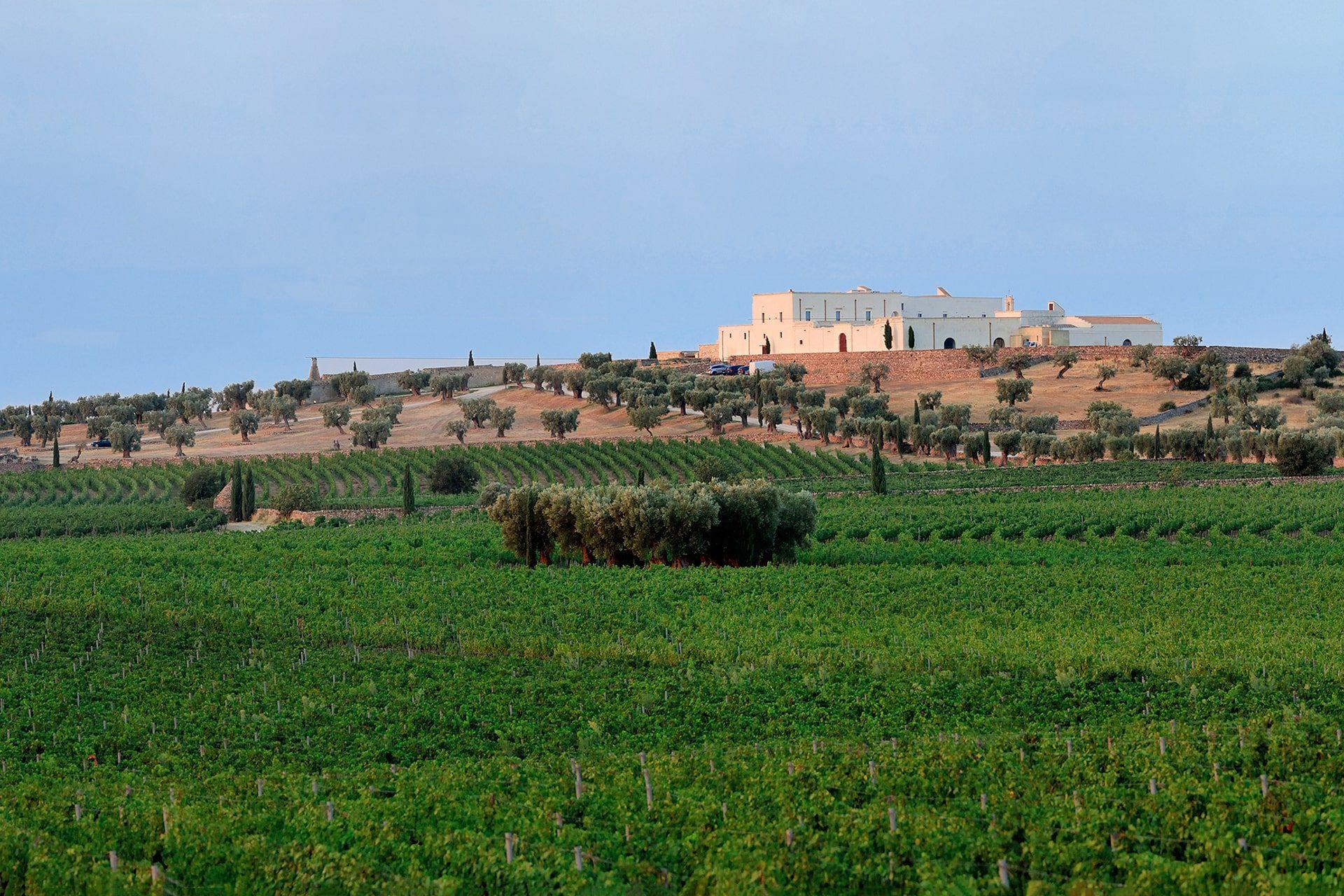 "Vista della Masseria Amastuola dal ""Vigneto-Giardino"""