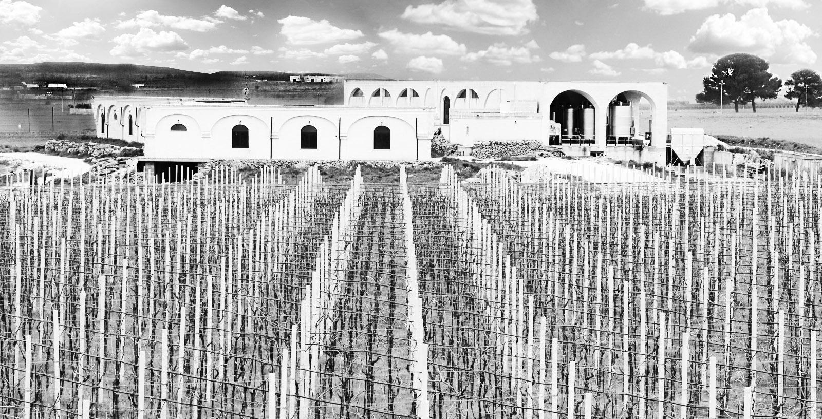 Vigna cantina Archetipo Puglia